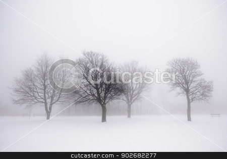Winter trees in fog stock photo, Foggy winter scene with leafless trees by Elena Elisseeva