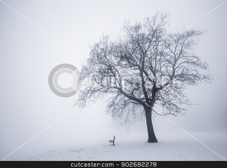 Winter tree in fog stock photo, Winter scene of leafless tree and park bench in fog by Elena Elisseeva