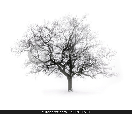Winter tree in fog stock photo, Single leafless tree in winter fog on white snow background by Elena Elisseeva