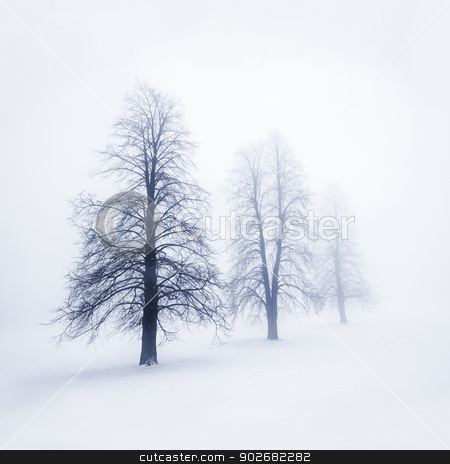 Winter trees in fog stock photo, Foggy moody winter scene with leafless trees by Elena Elisseeva