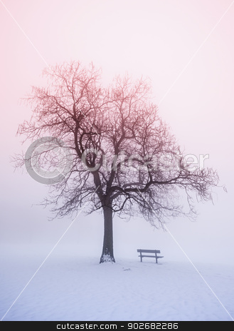 Winter tree in fog at sunrise stock photo, Foggy winter sunrise scene with leafless tree and park bench by Elena Elisseeva