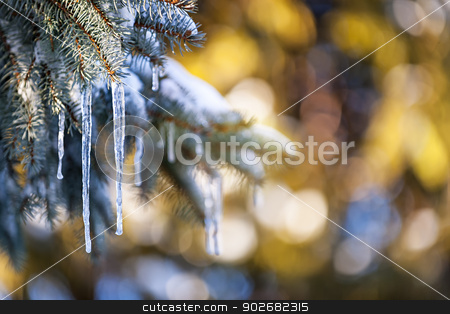Icicles on fir tree in winter stock photo, Christmas winter background with icicles hanging from spruce branches by Elena Elisseeva