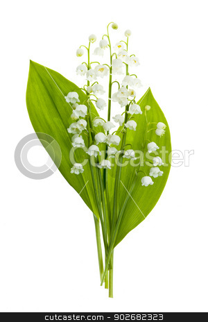 Lily-of-the-valley flowers on white stock photo, Lily of the valley flowers bouquet isolated on white background by Elena Elisseeva