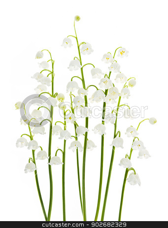 Lily-of-the-valley flowers on white stock photo, Lily of the valley flowers isolated on white background by Elena Elisseeva