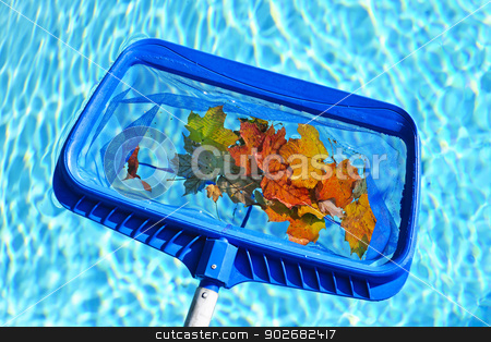 Skimming leaves from pool stock photo, Cleaning swimming pool of fall leaves with blue skimmer before closing by Elena Elisseeva