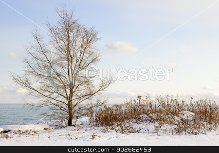 Winter shore of lake Ontario stock photo, Snowy winter shore of lake Ontario in Sylvan park Toronto by Elena Elisseeva