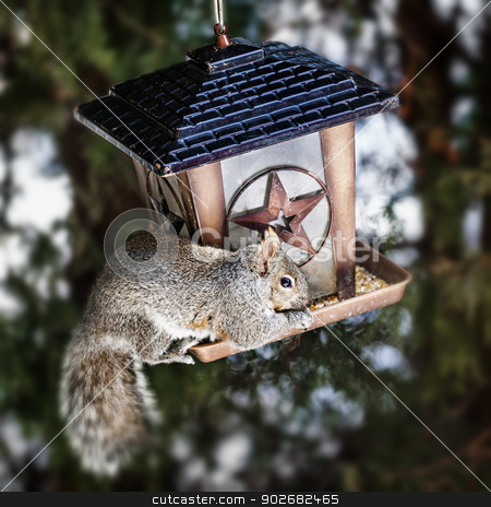 Squirrel stealing from bird feeder stock photo, Gray squirrel sitting on bird feeder and eating seeds by Elena Elisseeva