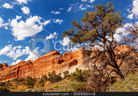 Tunnel Arch Rock Canyon Pine Tree Devils Garden Arches National  stock photo, Tunnel Arch Rock Canyon Pine Tree Devils Garden Arches National Park Moab Utah USA Southwest.  by William Perry