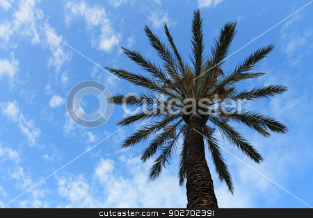 Tropical Palm Tree stock photo, Silhouetted tropical palm tree with blue sky and cloudscape background. by Martin Crowdy