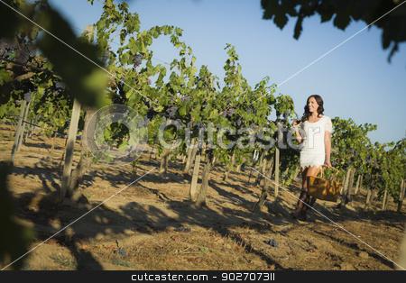 Young Woman Enjoying A Walk and Wine in Vineyard stock photo, Young Mixed Race Woman Enjoying A Walk and a Glass of Wine in the Vineyard. by Andy Dean