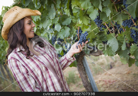 Young Adult Female Farmer Inspecting Grapes in Vineyard stock photo, Young Mixed Race Adult Female Farmer Inspecting Grapes in the Vineyard. by Andy Dean