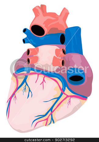 Heart Organ Retro stock vector clipart, Illustration of the heart organ isolated on white background done in retro style. by patrimonio