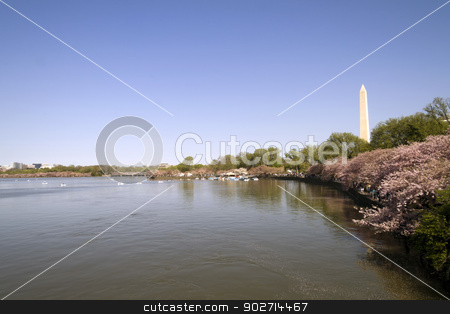 Cherry Blossoms with the Washington Monument  stock photo, Washington Monument in Washington D.C. and the Cherry Blossoms by Kevin Tietz