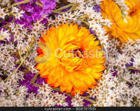Dried Orange  Flower Baby's Breath Blooming  stock photo, Dried Orange Flower Baby's Breath Bouquet Closeup Petals Blooming by William Perry