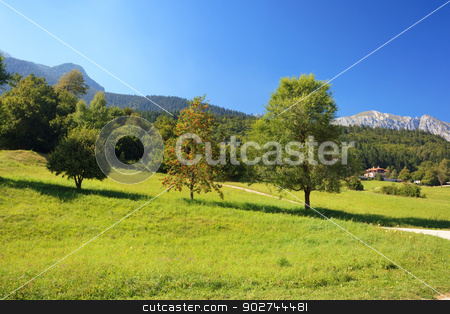 Alpine landscape stock photo, Alpine landscape with green meadow and trees in Andalo, Italy by Natalia Macheda