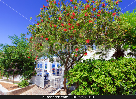 Path to the sea stock photo, Bottlebrush near a wicket closing path to the sea, Panarea island by Natalia Macheda