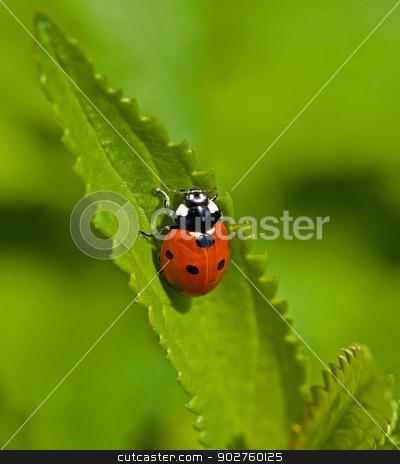 Seven-spot Ladybird stock photo, Macro image of Seven-spot Ladybird or Ladybug by Susan Robinson