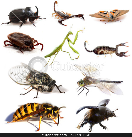 insects and scorpions stock photo, insects and scorpions in front of white background by Bonzami Emmanuelle