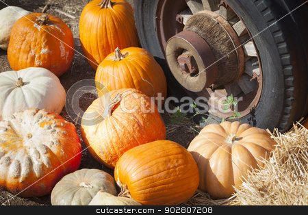 Fresh Fall Pumpkins and Old Rusty Antique Tire  stock photo, Fresh Orange Pumpkins and Old Rusty Antique Tire in a Rustic Outdoor Fall Setting.  by Andy Dean