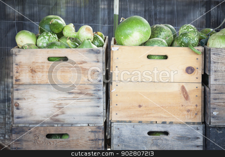 Fresh Fall Gourds and Crates in Rustic Fall Setting stock photo, Fresh Fall Green Gourds and Crates in a Rustic Outdoor Fall Setting.  by Andy Dean