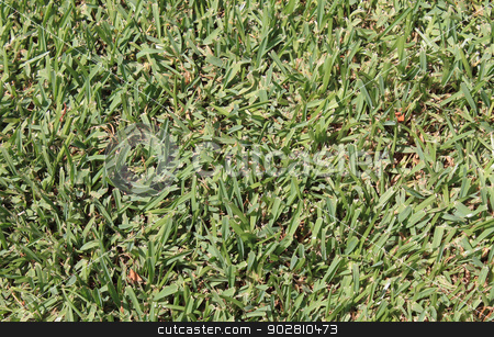 Green grass background stock photo, Abstract background of fresh green grass. by Martin Crowdy