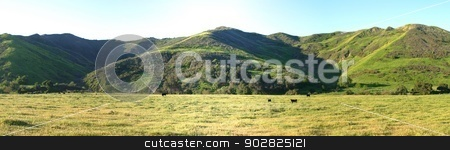 Meadow Valley stock photo, Green meadow valley with cattles near Ojai and Ventura. by Henrik Lehnerer
