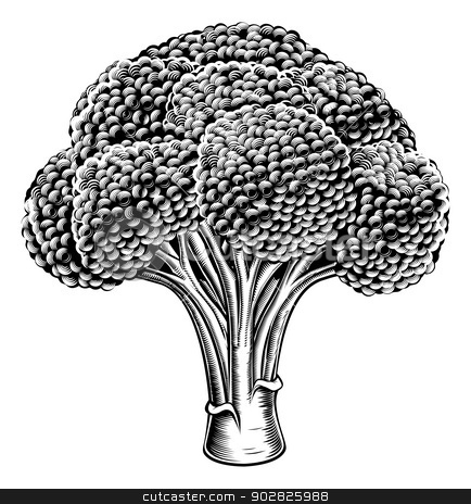 Vintage retro woodcut broccoli stock vector clipart, A vintage retro woodcut print or etching style broccoli illustration by Christos Georghiou