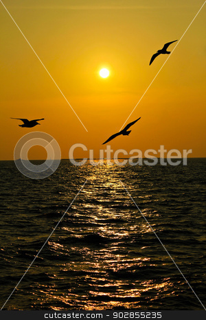 Seagulls flying over the coast in Thailand in sunset.