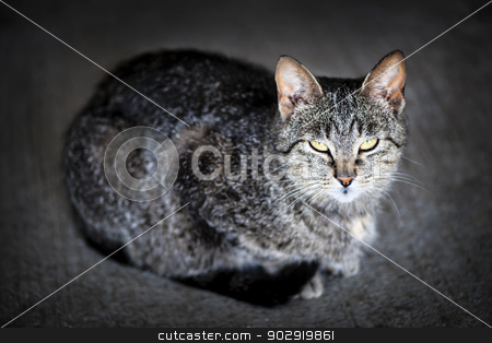 Grey cat portrait stock photo, Portrait of cute gray cat sitting on grey floor by Elena Elisseeva