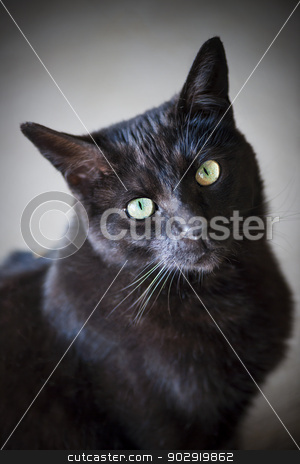 Black cat portrait stock photo, Portrait of black cat with green eyes by Elena Elisseeva