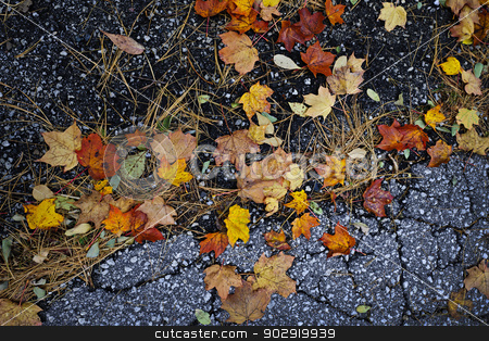 Fall leaves on pavement stock photo, Colorful autumn maple leaves and pine needles on old pavement by Elena Elisseeva