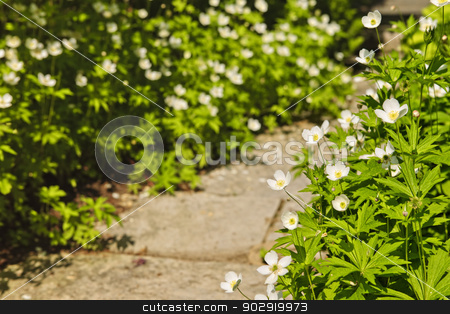Wildflower garden stock photo, Wildflower garden with paved path and blooming wood anemones by Elena Elisseeva
