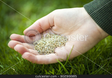 Hand holding grass seed stock photo, Grass seed for overseeding held in hand over green lawn by Elena Elisseeva