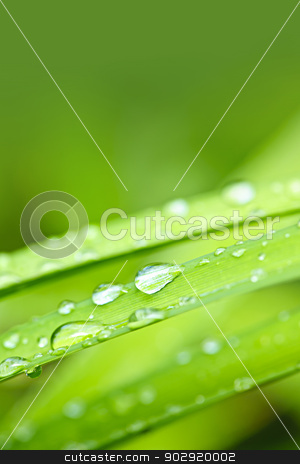 Water drops on grass blade stock photo, Macro closeup of water drops on grass blades with green copy space by Elena Elisseeva