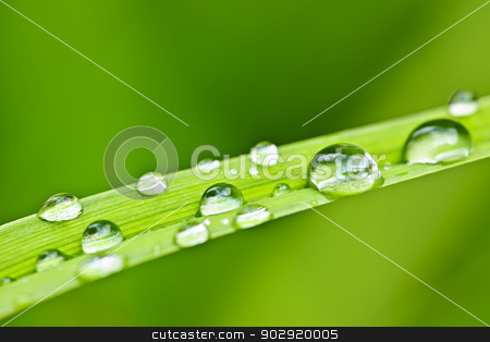 Water drops on grass blade stock photo, Macro closeup of water drops on green grass blade by Elena Elisseeva