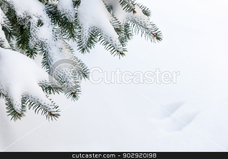 Snow on winter evergreen branches stock photo, Winter evergreen tree branches under fluffy snow with copy space by Elena Elisseeva