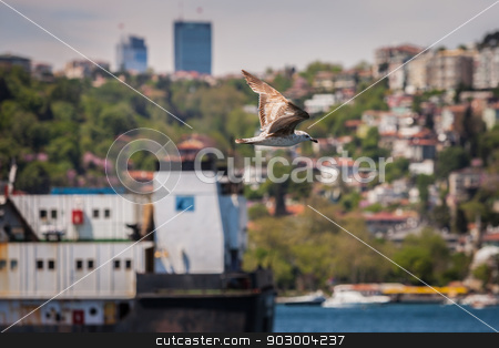 Gull Above the Bosphorus stock photo, Gull Flying above the Boshporus Strait in Istanbul by Scott Griessel