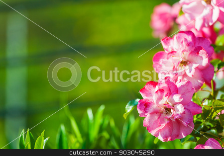 Pink flowers on green background with copy-space stock photo, Pink flowers on green background with copy-space by Natalia Macheda