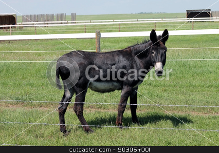 large donkey stock photo, large donkey by CHERYL LAFOND