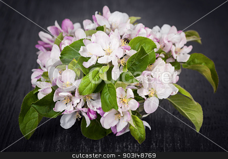 Pink apple blossoms stock photo, Pink apple blossoms bouquet on dark wood background by Elena Elisseeva