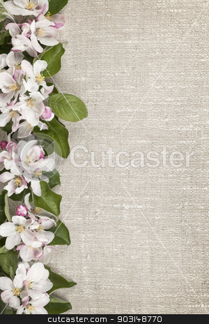 Apple blossoms border stock photo, Border of pink apple blossoms row with linen background by Elena Elisseeva
