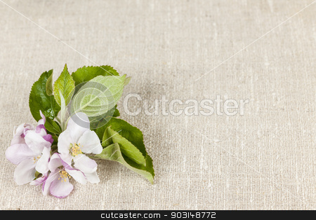 Linen background with apple blossom stock photo, Woven linen background with spring apple blossom by Elena Elisseeva