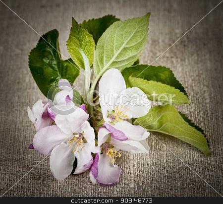 Apple blossom on linen stock photo, Pink apple blossom closeup on rustic woven linen fabric by Elena Elisseeva
