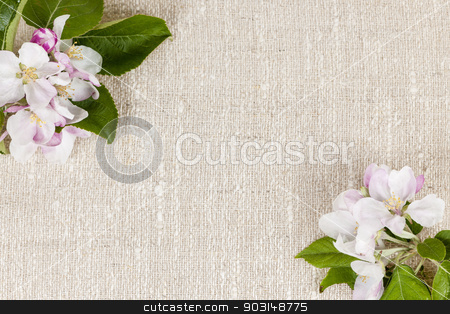 Linen background with apple blossoms stock photo, Natural linen background with spring apple blossom flowers by Elena Elisseeva