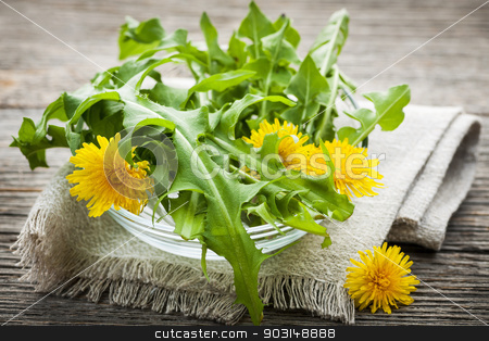 Dandelions greens and flowers stock photo, Foraged edible dandelion flowers and greens in bowl by Elena Elisseeva