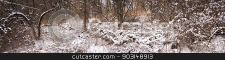 Winter forest panorama stock photo, Winter panoramic landscape of trees and plants in forest with snow by Elena Elisseeva