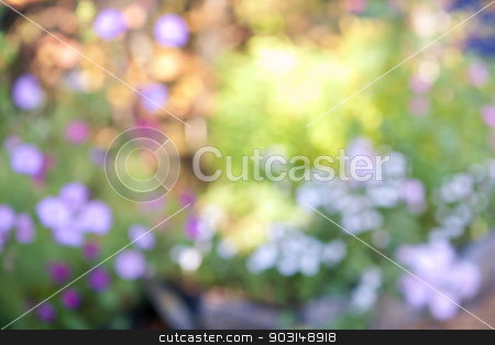 Defocused flower garden stock photo, Abstract blurred out of focus background with flower garden by Elena Elisseeva