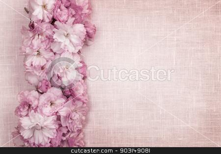 Cherry blossoms border on pink linen stock photo, Border of pink cherry blossoms row with linen background by Elena Elisseeva