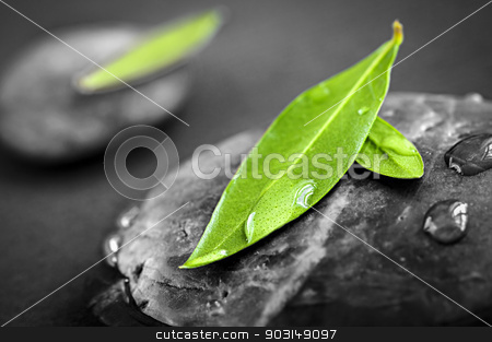 Stones with green leaves stock photo, Black and white zen stones submerged in water with color accented green leaves by Elena Elisseeva