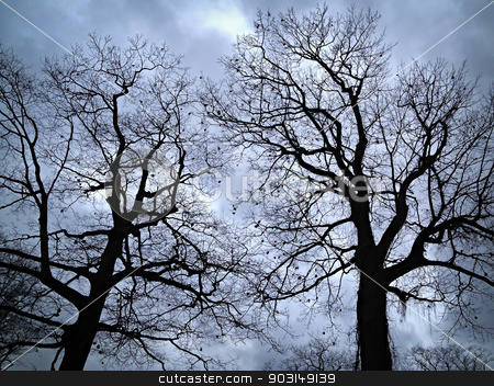 Leafless trees against evening sky stock photo, Two oak trees in winter silhouetted on overcast sky by Elena Elisseeva